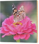 Painted Lady On Red Zinnia 3  Wood Print