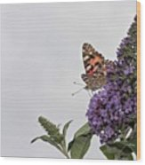 Painted Lady (vanessa Cardui) Wood Print by John Edwards