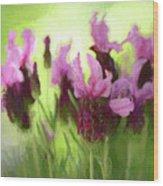 Painted Lavender By Kaye Menner Wood Print