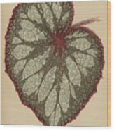 Painted Leaf Begonia Wood Print