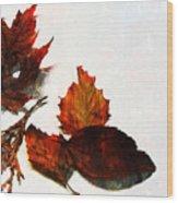 Painted Leaf Series 5 Wood Print