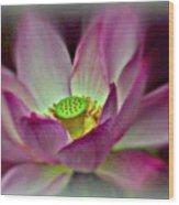 Painted Lotus Wood Print