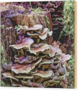 Painted Mushrooms Wood Print