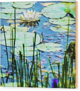 Painted North American White Water Lily Wood Print
