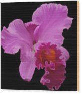 Painted Orchid Wood Print