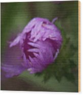 Painted Purple Aster Wood Print