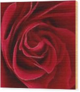 Painted Rose Wood Print