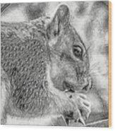 Painted Squirrel Wood Print