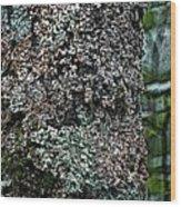 Painted Treebark Woodcut Wood Print