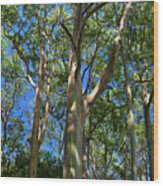 Painted Trees Wood Print