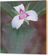 Painted Trillium Wood Print