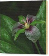 Painted Trillium In The Rain Wood Print
