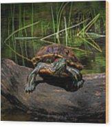Painted Turtle Sunning Itself On A Log Wood Print