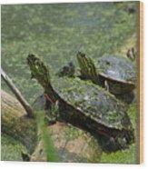 Painted Turtles Wood Print