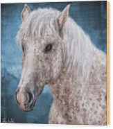 Painting Of A Brindle Horse With White Coat Wood Print