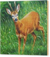 painting of young deer in wild landscape with high grass. Eye contact. Wood Print