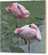 Pair In Pink Wood Print