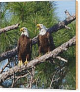 Pair Of American Bald Eagle Wood Print