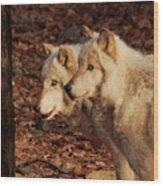 Pair Of Beauties Wood Print