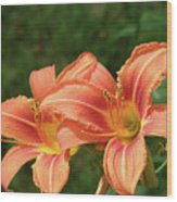 Pair Of Blooming Orange Lilies In A Garden Wood Print