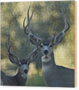 Pair Of Bucks Wood Print