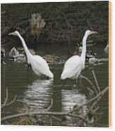 Pair Of Egrets Wood Print by George Randy Bass