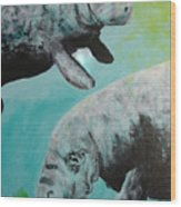 Pair Of Florida Manatees Wood Print