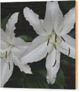 Pair Of Flowering White Stargazer Lilies In Bloom Wood Print