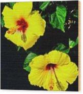Pair Of Golden Hibiscus In Morning Sun Wood Print