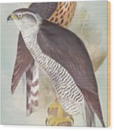 Pair Of Goshawks Wood Print