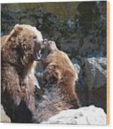 Pair Of Grizzly Bears Biting At Each Other Wood Print