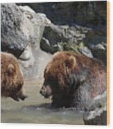 Pair Of Grizzly Bears Wading In A Shallow River Wood Print