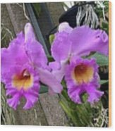 Pretty Purple Orchids Wood Print