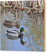 Pair Of Mallard Ducks Wood Print
