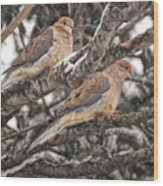 Pair Of Morning Doves Wood Print