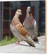 Pair Of Pigeons Wood Print