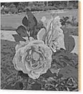 Pair Of Roses In Grayscale Wood Print
