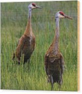 Pair Of Sandhill Cranes Wood Print