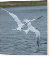 Pair Of Terns Wood Print