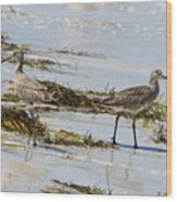 Pair Of Willets Wood Print