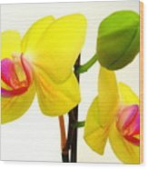 Pair Of Yellow Orchids Wood Print