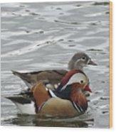 Paired Wood-ducks Wood Print