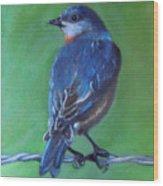 Pajarito Azul De Espaldas Wood Print