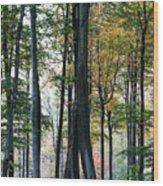 Palatine Forest Wood Print