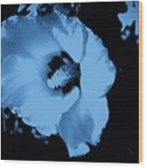 Pale Blue Tinge Hibiscus Flower Wood Print
