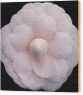 Pale Pink Camelia Wood Print