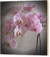 Pale Pink Orchids B W And Pink Wood Print