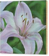 Pale Pink Stargazer Lillies II 2010 Wood Print
