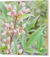 Pale Powder Pink Plant Wood Print