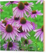 Pale Purple Coneflowers Wood Print